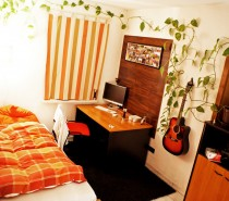 bedroom-money-plant
