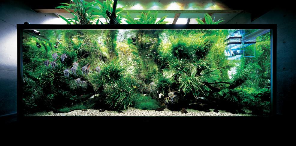 Decor Aquarium Carre