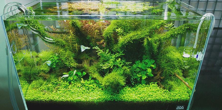 Nature style Aquascape | Interior Design Ideas.