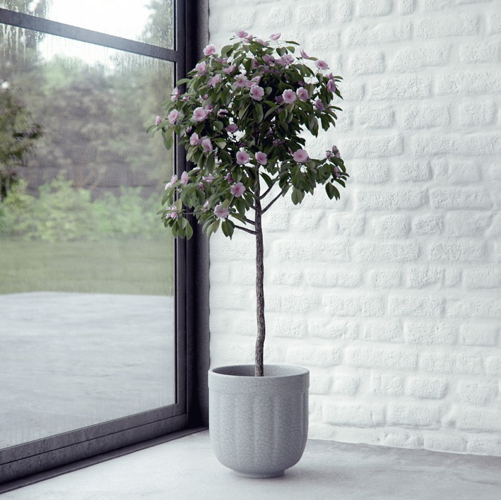 House Plant Render By Bbb Interior Design Ideas