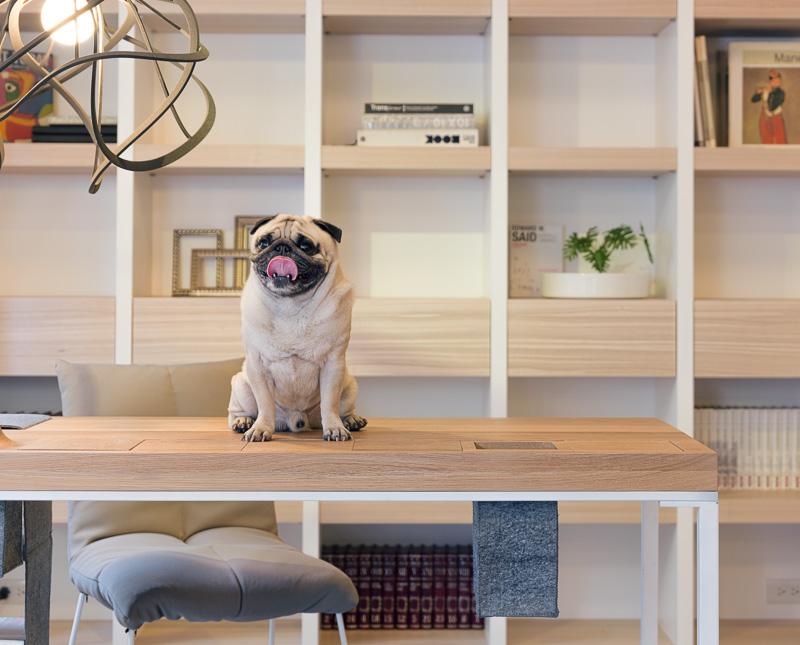 Pet apartment small home with smart use of space taiwan
