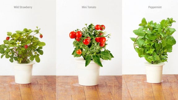 Product of the week click grow smart garden