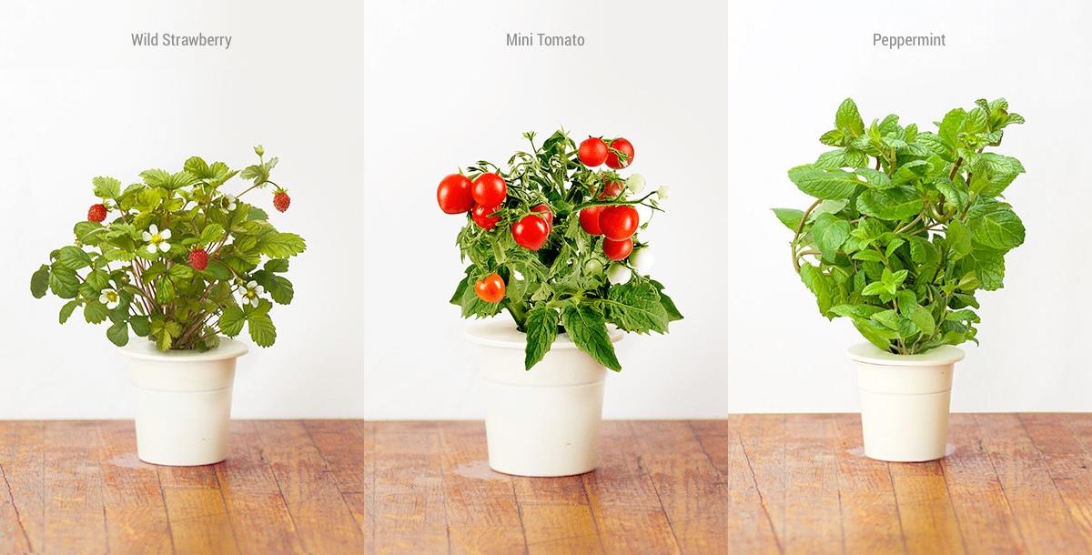 Product Of The Week Click Amp Grow Smart Garden