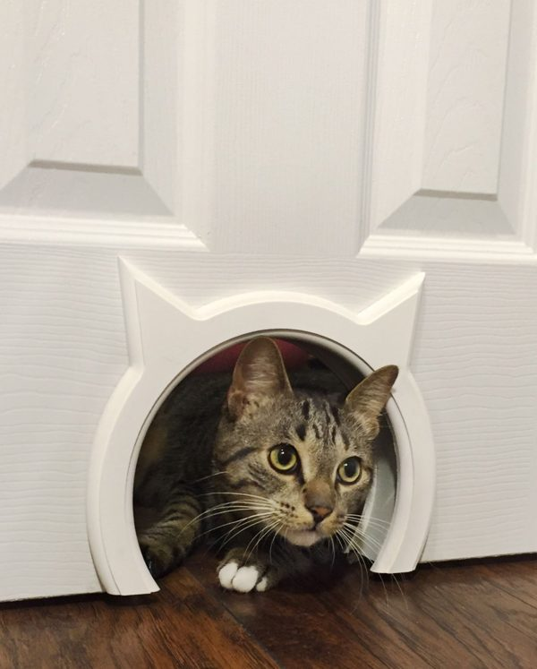 Magnificent Super Stylish Cat Houses Furniture Home Essentials For Squirreltailoven Fun Painted Chair Ideas Images Squirreltailovenorg