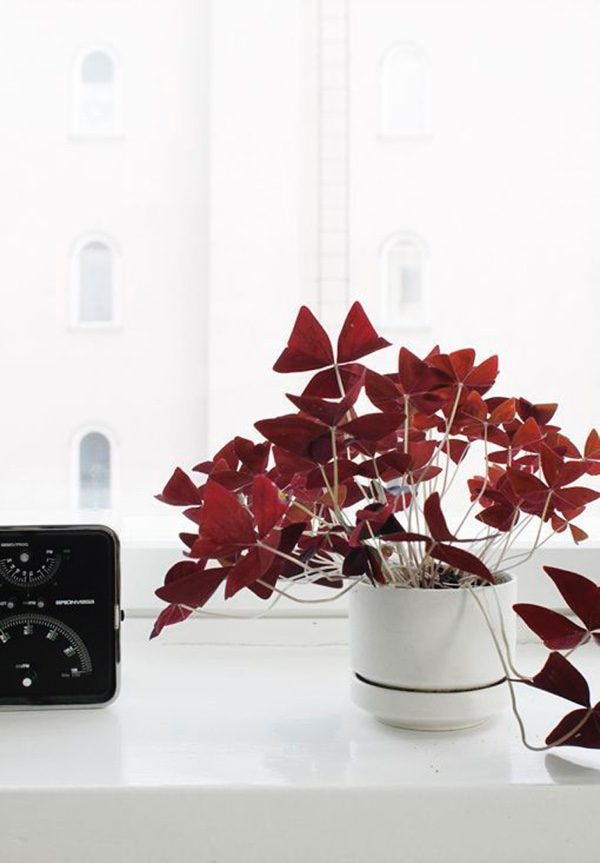 32 Beautiful Indoor House Plants That Are Also Easy To Maintain on red foliage flowers, red foliage bushes, red foliage grasses, red foliage annuals, red foliage hibiscus, common indoor houseplants, red foliage plants, red and green houseplants, red foliage perennials, red flowering houseplants, red foliage vines,