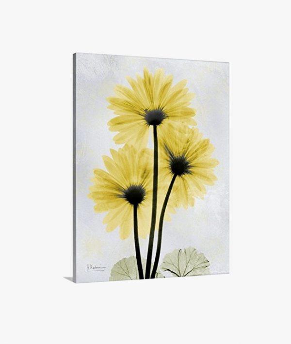 Exquisite Floral X Ray Art Prints By Albert Koetsier