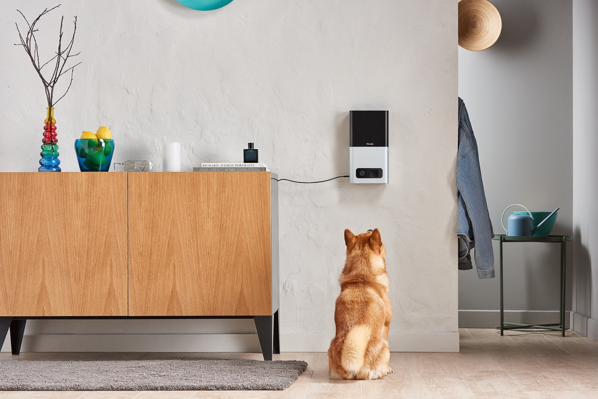 Cool Product Alert A Pet Camera That Can Also Feed Your Pet