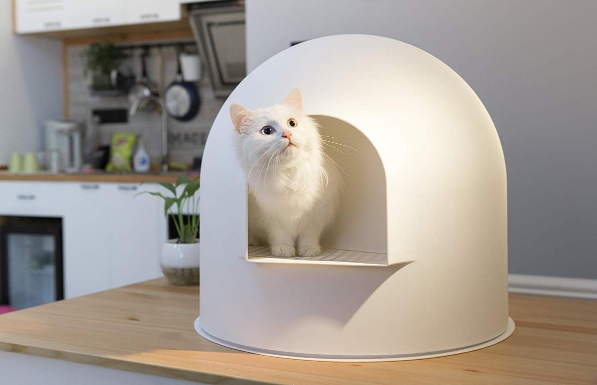 Product Of The Week A Cute Igloo Shaped Cat Litter Box